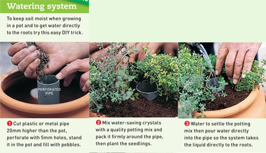 How to Plant Vegetables in Pots