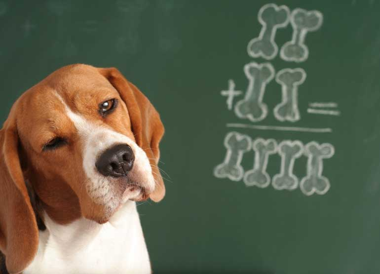 Proof Positive Dogs Are Smarter Than Cats