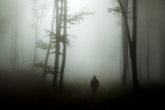 13 true stories from the most haunted forests in the world