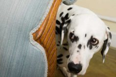 7 Unexpected Reasons Your Dog Might Have Anxiety