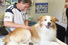6 tips to help your dog live longer