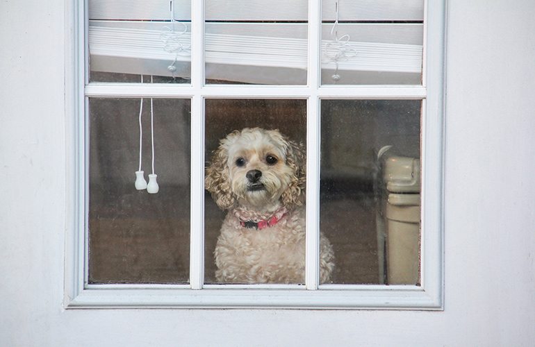 Don't assume your dog will deter a burglar