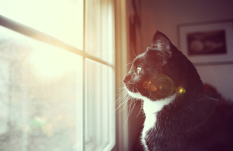 It's OK to leave cats at home alone for a long weekend