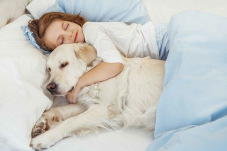 golden retriever dog asleep with young child