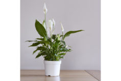 10 indoor plants you (probably) can't kill