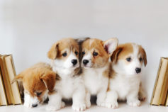 Adorable puppy pictures that will make you melt