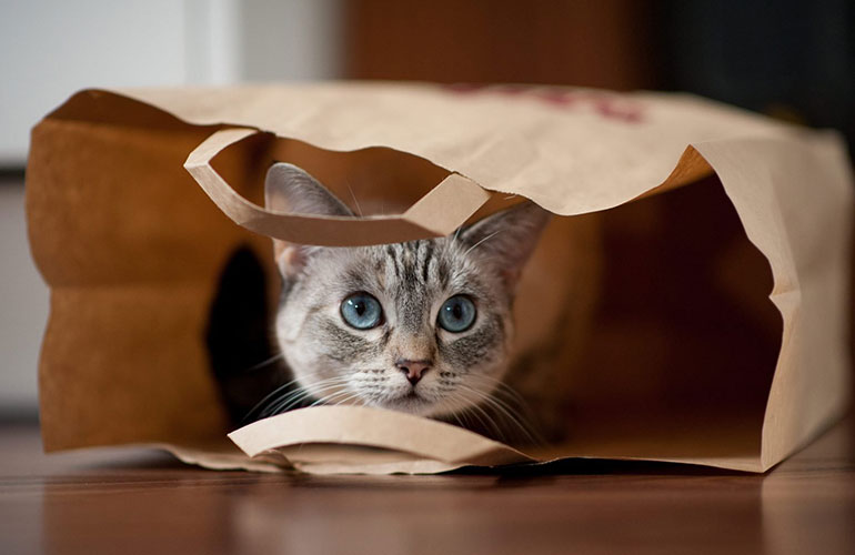 Groceries, purr-ty, please!